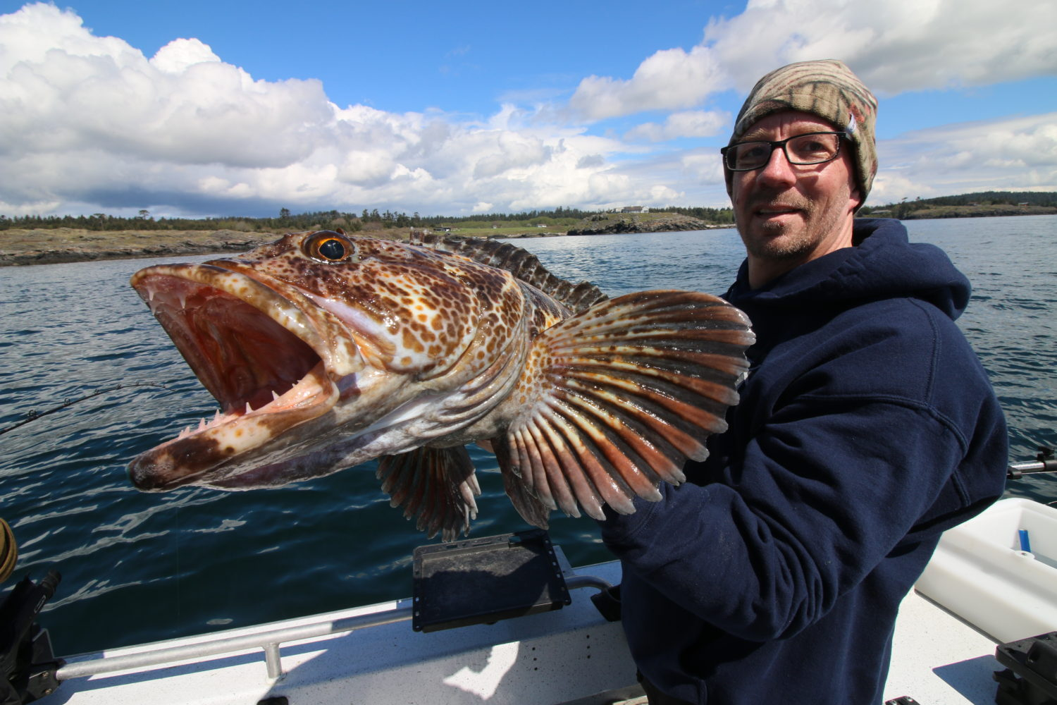 Lingcod the beast with beauty in the san juan islands for Fishing san juan islands
